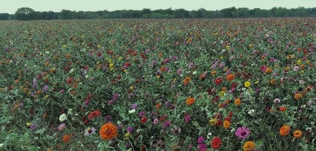 Field of Wildflowers2